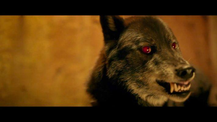 Wolf in Wolf-Gäng