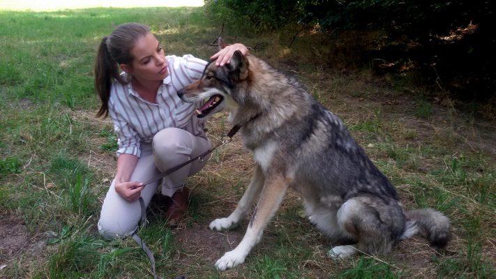 Filmtiere Film Wölfe Wolfsland