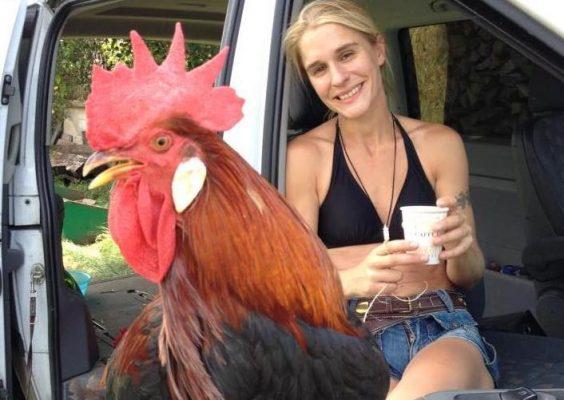 Filmtiere Hühner