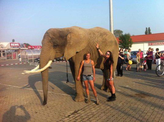 Filmtier Elefant