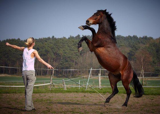Filmtiere Pferde