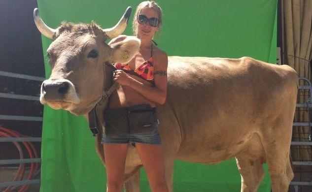 Filmtiere Kühe